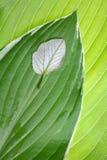 Comparação da folha. Individualidade imagens de stock