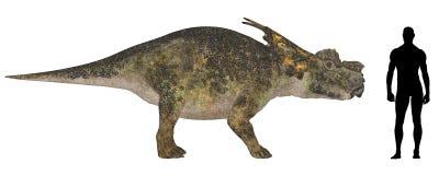 Comparação do tamanho de Achelousaurus Imagem de Stock Royalty Free