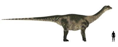 Comparação do tamanho de Antarctosaurus Imagem de Stock Royalty Free