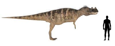 Comparação do tamanho de Ceratosaurus Fotografia de Stock