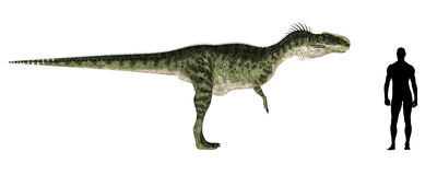 Comparação do tamanho de Monolophosaurus ilustração stock