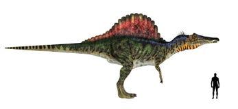 Comparación de la talla de Spinosaurus Fotos de archivo libres de regalías