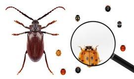 comparación Wold de los insectos foto de archivo libre de regalías