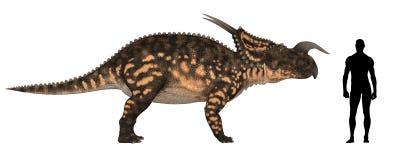 Comparación de la talla de Einiosaurus Imagenes de archivo