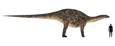 Comparaison de taille de Dicraeosaurus Photo stock