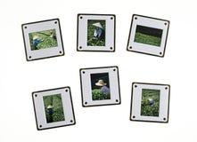 Comparar diapositivas fotos de archivo libres de regalías