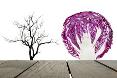 Compare barren tree and red cabbage Stock Photos