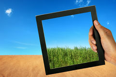 Compare desert and green grass Stock Photos
