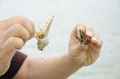 Compare hermit crab Stock Image