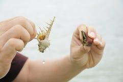 Compare hermit crab. Marine wildlife on hand stock image