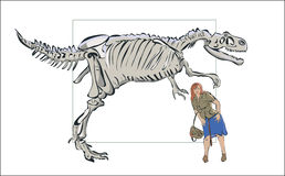 Compare man with a skeleton of a dinosaur. Royalty Free Stock Photo
