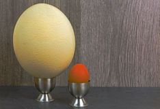 Comparison of chicken egg and ostrich eggs. Ostrich egg and hen egg in the stands on a wooden background. Comparison of the size of eggs. Close, horizontal view Stock Photography