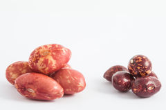Comparison between dry and soaked beans Royalty Free Stock Photos