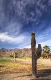Compartiment de Loreto, Californie Sur, Mexique Images stock