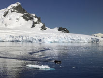 Compartiment de paradis - Antarctique Images libres de droits