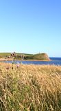 Compartiment Dorset de Kimmeridge Image libre de droits