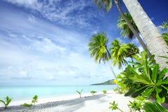 Compartiment tropical Photos stock