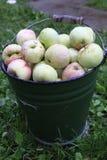 Compartimiento de manzanas Foto de archivo libre de regalías