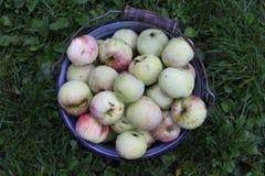 Compartimiento de manzanas Fotos de archivo libres de regalías