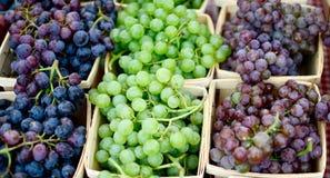 Compartimiento de uvas fotografía de archivo libre de regalías