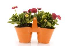 Compartimientos anaranjados decorativos Fotos de archivo libres de regalías
