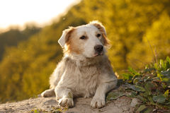 Compasión Ginger Dog Outdoor en fondo verde Fotos de archivo