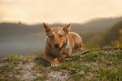 Compasión Ginger Dog Outdoor en fondo verde Imágenes de archivo libres de regalías