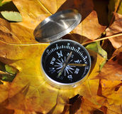 Compass among the autumn leaves. Stock Photos