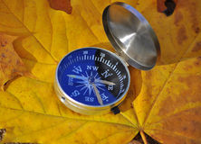 Compass among the autumn leaves. Royalty Free Stock Images