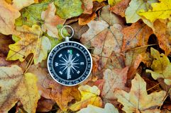 Compass on the background of fallen autumn leaves.  stock photo