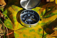 Compass on fallen leaves. Royalty Free Stock Photo