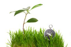 Compass in green grass Stock Image