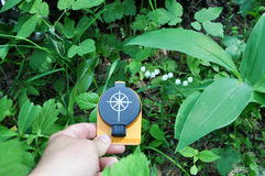 Compass in hand, against the background of blooming lilies. Royalty Free Stock Photo