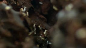 Compass termites break down dead grass and extract nutrients. Northern Australia stock images