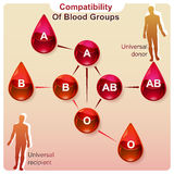 Compatibility of blood groups Stock Images