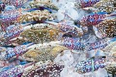 Compensi la deriva nel mercato di prodotti freschi al traghetto di Angsila, Choburi, Tailandia Sea Fotografie Stock