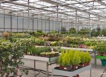Comperi per coltivazione della serra e la vendita delle piante d'appartamento Immagine Stock Libera da Diritti