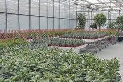 Comperi per coltivazione della serra e la vendita delle piante d'appartamento Immagini Stock Libere da Diritti