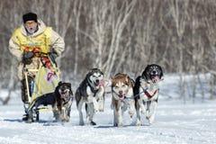 Competência de cão Beringia do trenó de Kamchatka, copo do russo de disciplinas da neve da raça de cão de trenó Fotos de Stock Royalty Free