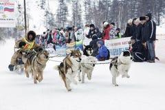 Competência de cão do trenó de Kamchatka Rússia, Extremo Oriente Imagem de Stock Royalty Free