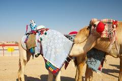 Competência de camelo do robô imagem de stock royalty free