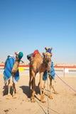Competência de camelo do robô imagens de stock