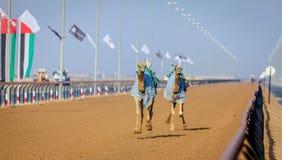Competência de camelo em Dubai Imagens de Stock