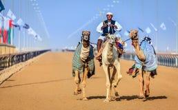 Competência de camelo em Dubai Imagem de Stock Royalty Free