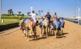 Competência de camelo em Dubai Fotos de Stock Royalty Free