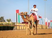 Competência de camelo em Dubai Fotografia de Stock