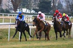 Competência de cavalos Imagens de Stock Royalty Free