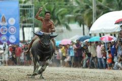 Competência do búfalo Fotografia de Stock Royalty Free