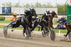 Competência do italiano do cavalo Imagem de Stock