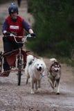 Competência do trenó do cão imagem de stock royalty free